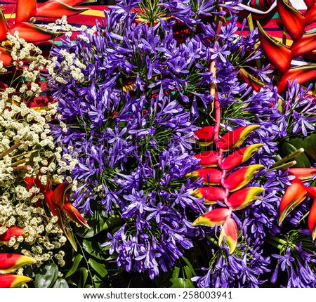 Exotic tropical flowers, Madeira, Portugal - stock photo
