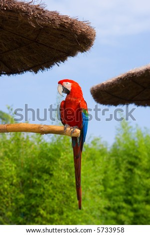 Exotic tropical parrot in the park