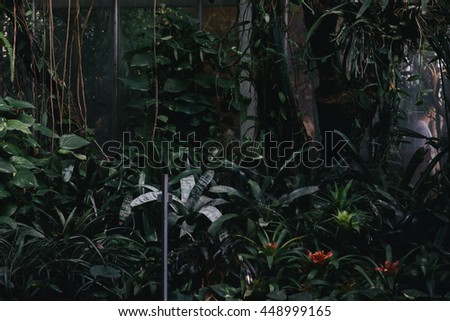 Exotic tropical plants, cactus and succulents in botanical garden - stock photo