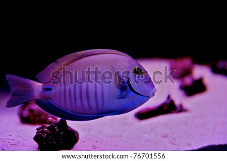 Exotic underwater image of a fish in Cozumel Mexico. - stock photo