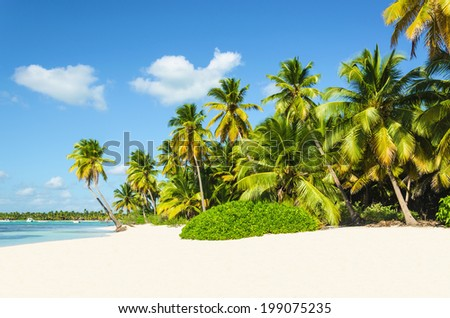 Exotic view - beautiful sandy beach with amazing palm trees entering the ocean - stock photo