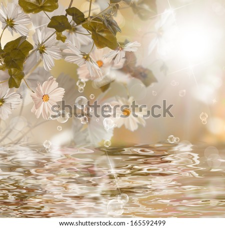Exotic water flower.Blossom water flora - stock photo