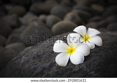 Exotic white flowers on the dark grey stone. Wellness and harmony symbol - stock photo