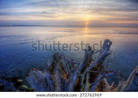 Exotically formed driftwood remnants on an ocean shore with distant cliffs - stock photo