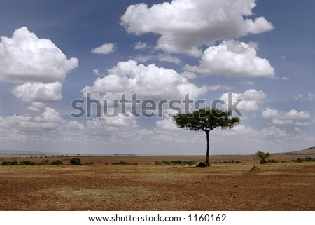 expansive plains of the masai mara