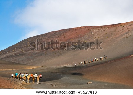 expedition of camels in the Timanfaya National Park, in Lanzarote, Canary Islands