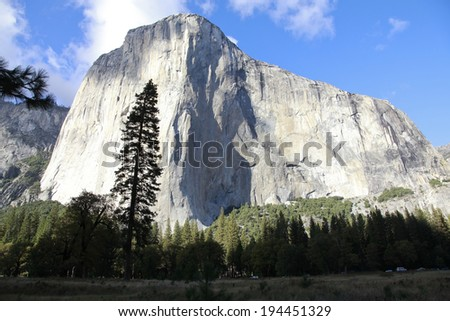 Expensive conifer and El Capitan - stock photo
