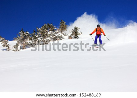 Expert skier races by a stand of fir in the Utah mountains, USA. - stock photo