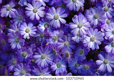 explosion of color, detail of lilac flowers in spring - stock photo