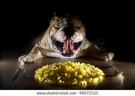 Expressive english bulldog portrait laying near noodels - stock photo