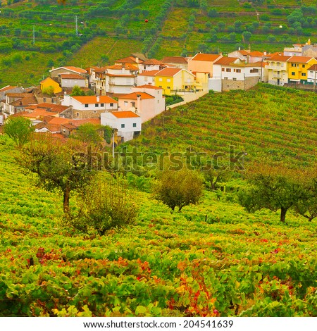Extensive Vineyards on the Hills of Portugal - stock photo