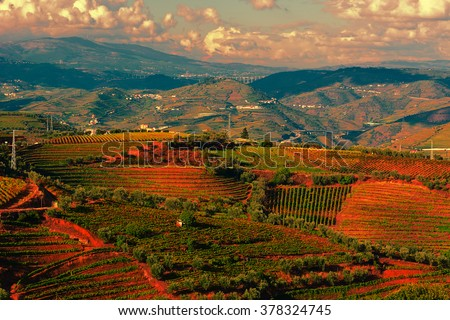 Extensive Vineyards on the Hills of Portugal at Sunset - stock photo