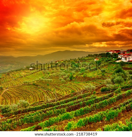 Extensive Vineyards on the Hills of Portugal, Instagram Effect - stock photo