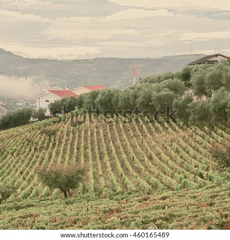 Extensive Vineyards on the Hills of Portugal, Retro Image Filtered Style - stock photo