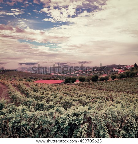 Extensive Vineyards on the Hills of Portugal, Vintage Style Toned Picture - stock photo