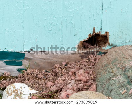 Exterior house wall mouse squirrel rodent messy burrow pest damage