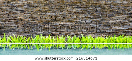 Exterior wall of modern beautiful building, brick wall with little green tree and its reflection on water. - stock photo