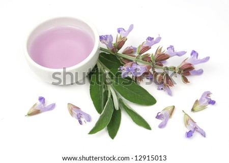 Extract of sage plant (lat. Salvia Officinalis) used for aromatherapy - stock photo
