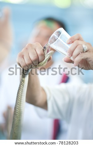 Extraction of snake poison - stock photo