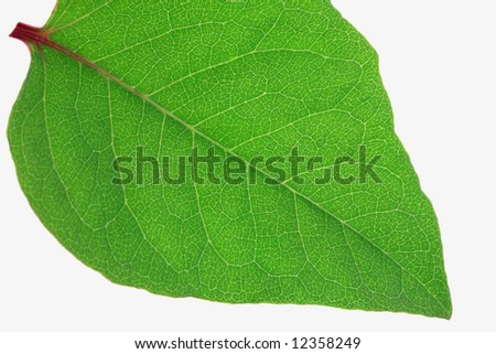 Extreme Close-up Green Leaf - stock photo