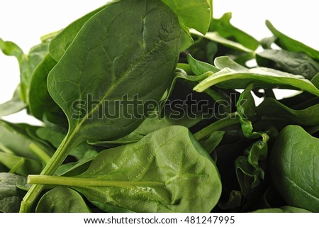 Extreme close-up image of baby spinach