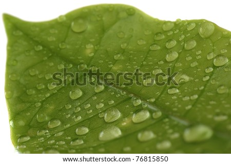 Extreme close-up image of leaf with drops