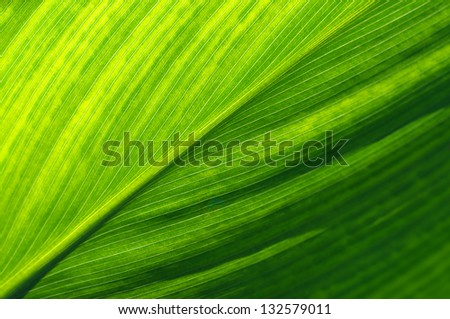 Extreme close-up of fresh green leaf as background. - stock photo