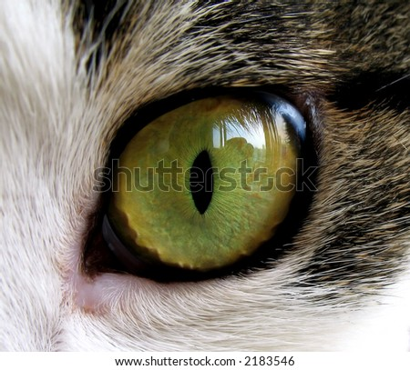 Extreme close-up of green cat's eye. - stock photo