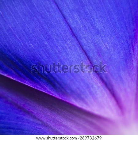 extreme close up shot of natural flower. vivid petal background  - stock photo