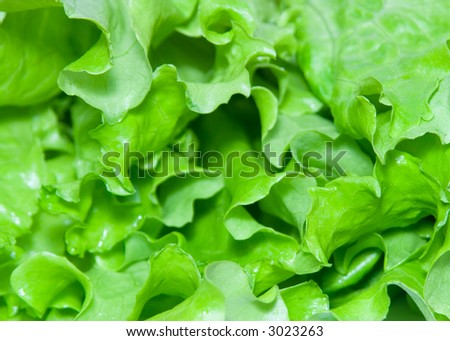 extreme close-up view of lettuce leaves
