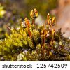 Extreme close-up with shallow of water drops on moss. - stock photo