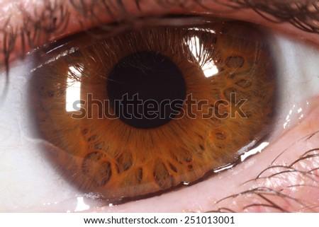 extreme closeup of brown human eye - stock photo