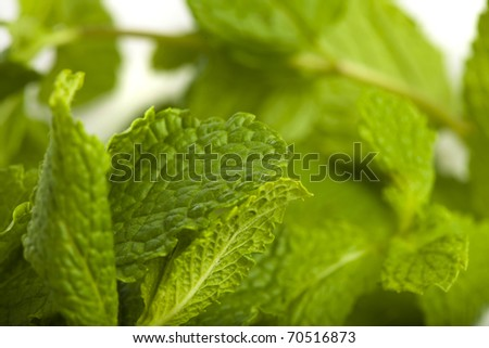 extreme closeup of mint leafs on white background - stock photo