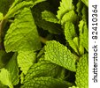 extreme closeup of various fresh mint leafs - stock photo