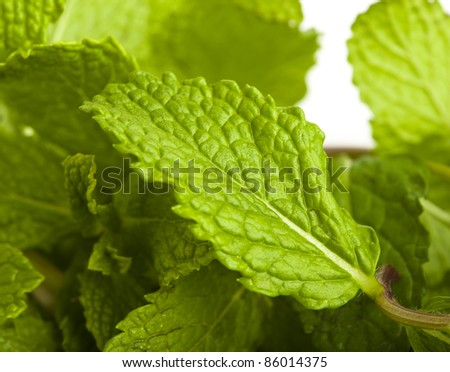 extreme closeup of various mint leafs - stock photo