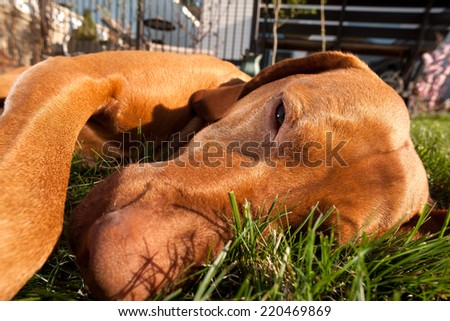 extreme closeup portrait of a dog laying in the  - stock photo