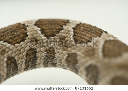 Extreme closeup rattlesnake scales and patterns - stock photo