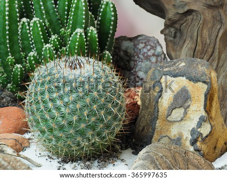 Extreme Depth of Field Photo of Cactus Close Up - stock photo