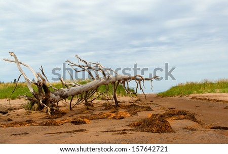 Extreme Driftwood - stock photo