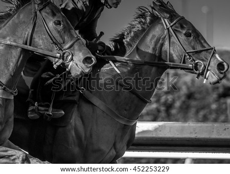 Extreme Focus at High Speeds of horses running in black and white - stock photo