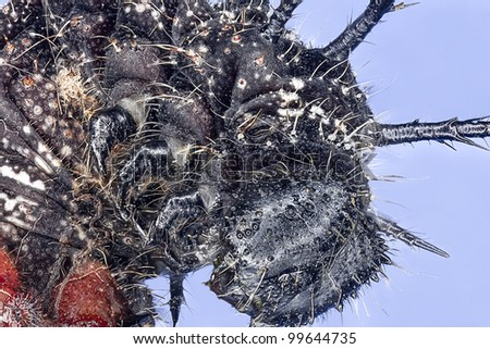 Extreme macro insect - stock photo