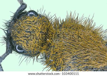 Extreme macro insect red wasp  (Polistes carolina) - stock photo