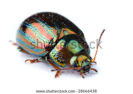 Extreme macro of a beautiful iridescent bug insect - stock photo