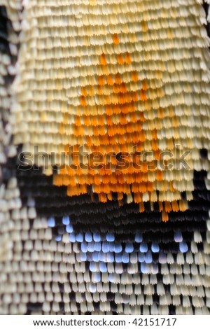 Extreme macro of Swallowtail butterfly wing - stock photo