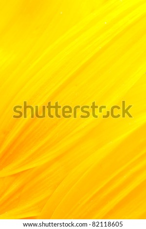 Extreme macro shot. Abstract background with sunflower petals - stock photo
