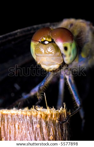 Extreme macrophotography of an dragonfly on an wood
