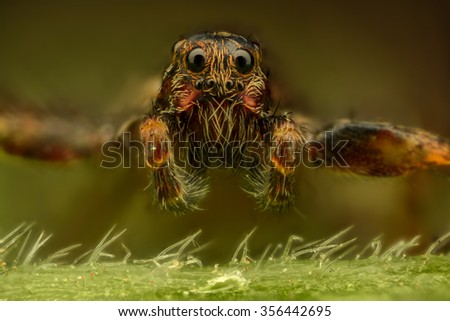 Extreme magnification - Brown spider, front view - stock photo