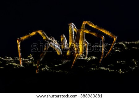 Extreme magnification - Creepy spider, backlit - stock photo