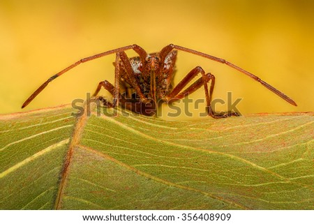 Extreme magnification - Stink Bug on a leaf - stock photo