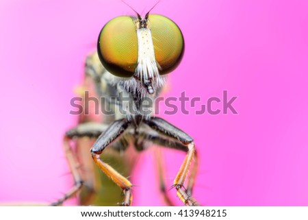 Extreme sharp and detailed macro of robber fly - stock photo